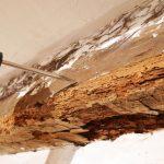 Diagnostics et expertise - Lutte contre les Termites